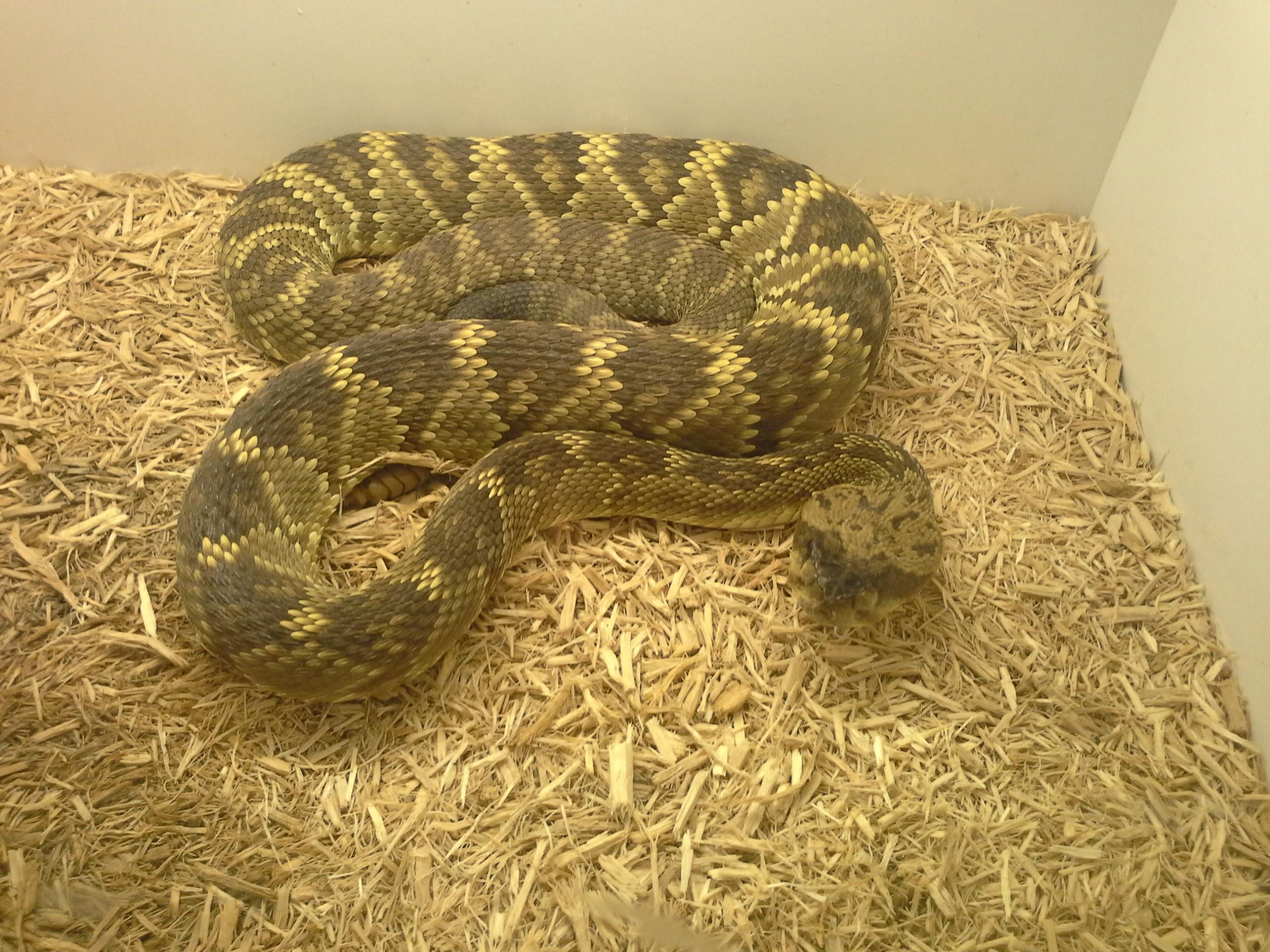 RattlesnakeDunn
